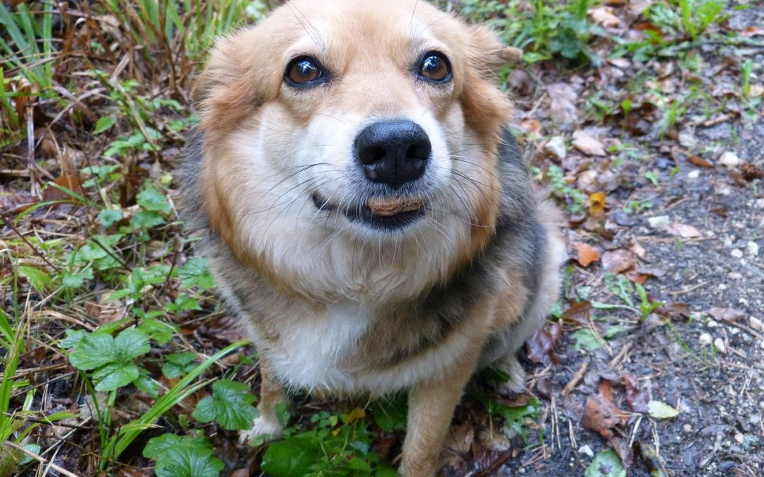 A Merrick dog food review – why this pet food is so good for your pet